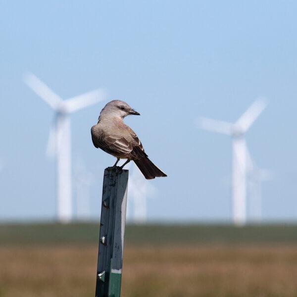 PP_250MW_Wind_CO4